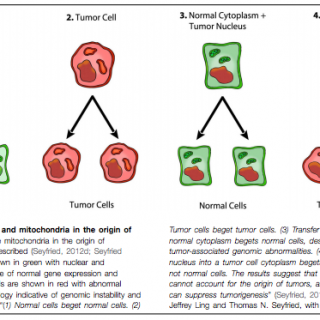 cancer-as-a-metabolic-disease