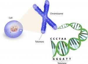 Cancer-genetic-disease