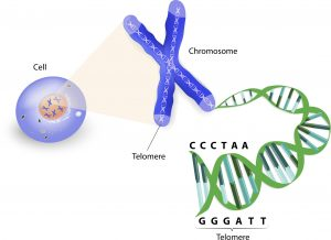 Cancer-genetic-disease